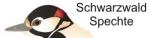 logoschwarzw-spechte